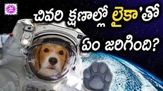 Download Laika Dog In Space Video Mystery in Telugu | About Space Facts | Dog Short Film in Telugu Mysteries Video