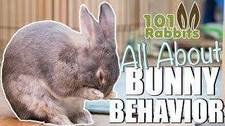 Download ALL ABOUT BUNNY BEHAVIOR 🐰 Video