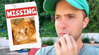 Download My Cat Is Missing Video