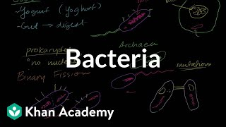 Download Bacteria Video