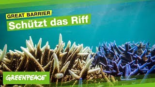 Download Great Barrier Reef in Gefahr Video