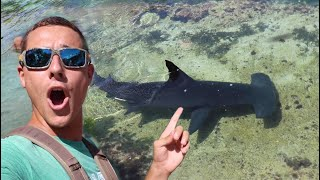 Download Almost Swam With Giant HAMMERHEAD SHARK! Video