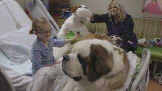 Download A Day in the Life of a Phoenix Children's Hospital Therapy Dog Video