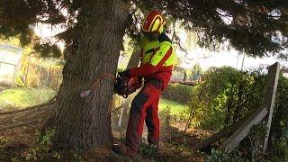 Download Weihnachtsbaum in Zwickau eingetroffen Video