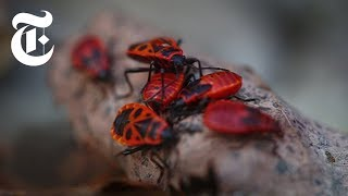 Download The Animals of Chernobyl   The New York Times Video