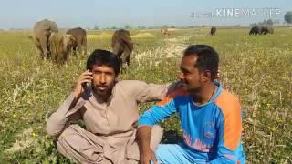 Download Saleem sahil funny 2017 at sindh tour Video