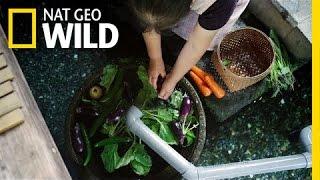 Download Unusual Kitchen Helpers | Wild Japan Video