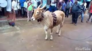 Download Shikaripurada kabaddi Video
