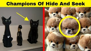 Download Hilarious Animals Who Are The Absolute Champions Of Hide And Seek Video