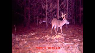 Download 4 Weeks of work and Patterning the Deer... Ruined on the day I go sit! Watch this... Video