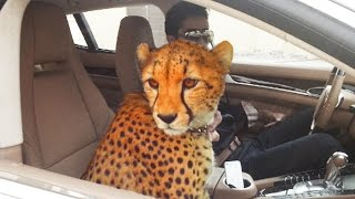 Download Amazing Things You'll Only See In Dubai Video