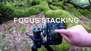 Download FOCUS stacking Lightroom i Photoshop - TUTORIAL PL Video