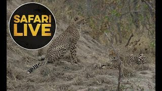 Download safariLIVE - Sunrise Safari - 2018, 17. June Video