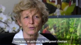 Download Les forêts: une source d'énergie naturelle Video
