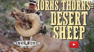 Download Horns, Thorns and Desert Sheep Hunting Video