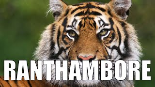 Download Evening Safari (Tiger sighting!!): Exploring Ranthambore - Ep3 Video