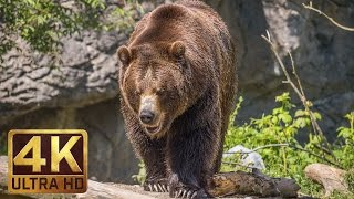 Download 4K Ultra HD Video of Wild Animals - 1 HR 4K Wildlife Scenery with Floating Music Video