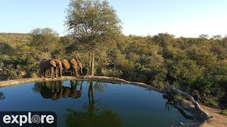 Download Africam Rosie's Pan powered by EXPLORE.org Video