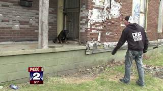 Download Detroit Dog Fighting Caught on Video Video