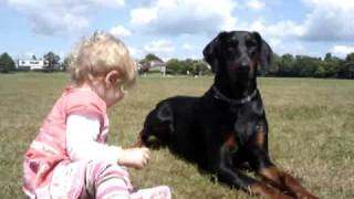 Download Doberman protects baby toddler at the park. MUST SEE! Video