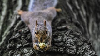 Download 8 Hour Video For Pets Featuring Squirrels - Relax Your Cat Video