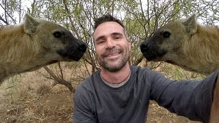 Download Hyena Rivalry!! | The Lion Whisperer Video