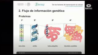 Download De factores transcripcionales al cáncer: ¿cómo se regula la expresión genética? Video