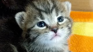 Download Kitten Close Up 2018-03-16 Video