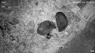 Download Hedgehog Street: male circling female one date night Video
