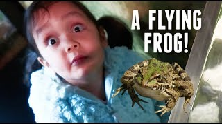 Download Reaction to a Flying Frog! - ItsJudysLife Vlogs Video