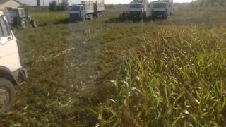 Download Заготовка кукурузы на силос .сумская область. Video