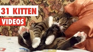 Download 31 Cute Cats | Funny Cat Video Compilation 2017 Video