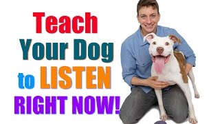 Download How to Get Your UNFOCUSED Dog to LISTEN to You RIGHT NOW! (″Leave it″/″Look at Me″ Combo) Video