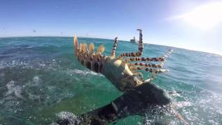 Download Spearfishing Montebello Islands Video