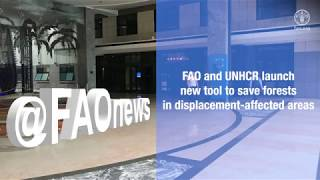 Download FAO and UNHCR launch new tool to save forests in displacement-affected areas Video