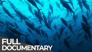 Download ►Track of the Tuna (FULL DOCUMENTARY) Video