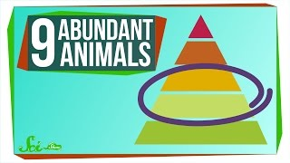 Download 9 of the Most Abundant Animals on Earth Video