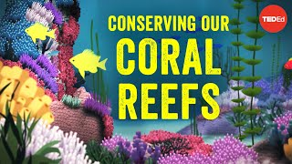 Download Conserving our spectacular, vulnerable coral reefs - Joshua Drew Video