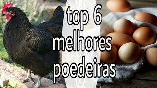 Download Top 6 das melhores galinhas poedeiras Video