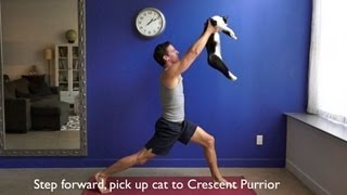 Download Yoga with Cats Video