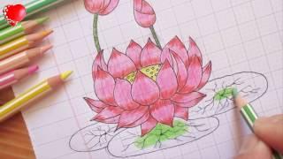 Download Vẽ hoa sen đơn giản Video
