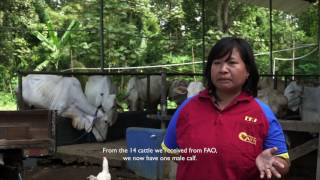 Download Cattle of Hope – (English Subs) Video