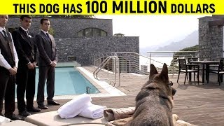 Download 10 Most Richest Animals In The World Video