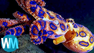 Download Top 10 Terrifyingly Deadly Sea Creatures Video