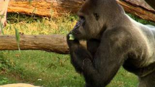 Download Feeding the Animals at the Smithsonian's National Zoo Video