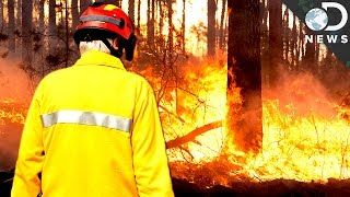 Download Are Fires Actually Good For Forests? Video