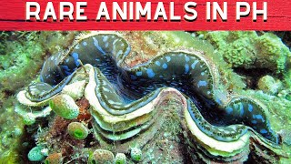 Download 10 Rare Animals Found In The Philippines - Worlds Biggest Video