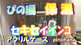 Download セキセイインコ ぴのの冬支度 アクリルケース 保温 pinohana Video