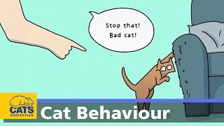 Download Why does my cat scratch the furniture? - Ain't Misbehaving episode 3 Video