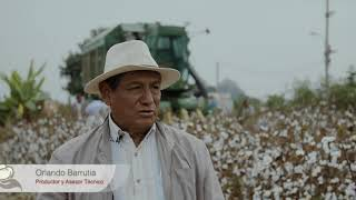 Download Cosecha mecanizada de algodón, Perú 2018 Video